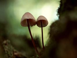 Brother Mushrooms by SottoPK