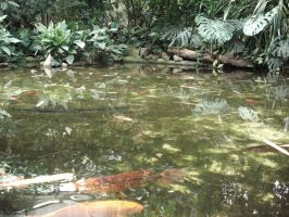 Carps koin in zoo.4 by Lukotus