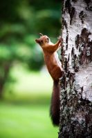 I got a squirrel in my tree by brokenbokeh