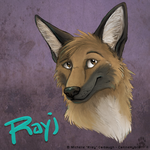 Rayj the Coydog by CanineHybrid