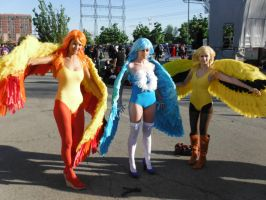 Anime North 2013 - All 3 Legendary bird pokemon by DragonFly188