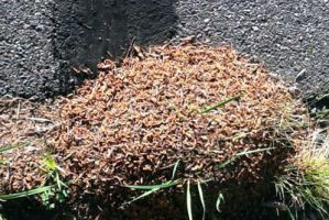 Pile of Maggots by cordria