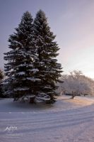 Snow Trees by Nebey