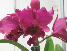 145 orchid show by crazygardener