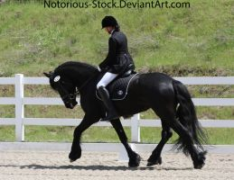 Dressage 003 by Notorious-Stock