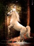 Untamed Beauty by Linzee777 by Fantasy-Fellowship