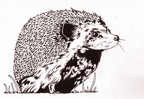 Hedgehog by Yoruosoku