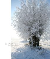 Ice Dream by MissLoungegirl