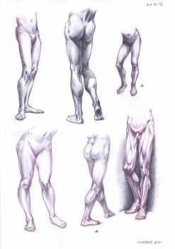 Anatomy Studies by Robolus