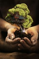 bonsai tree mansion by iGabo