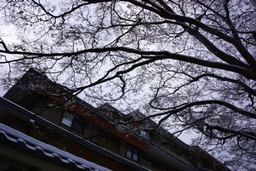Snow in Kyoto by simply-unidentified