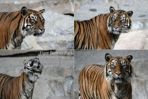 Tiger Portrait Pack by neverFading-stock
