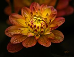 Floral in Color - Oct by UrbanRural-Photo