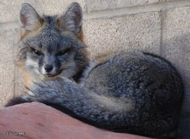 Foxy Lady II by tso2me