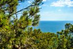 Trees and Sea Paguera by SqueezeBoxx
