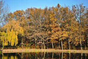Autumn 2011 XI. by anone52