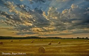 Hungarian summer. HDR- picture. by magyarilaszlo