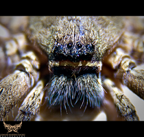 Spider Macrotography by lee-sutil