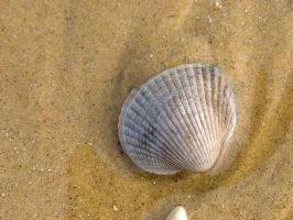 shell by miralkhan