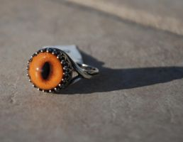 SOLD Red Fox Taxidermy Glass Eye Ring by kittykat01