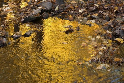 Golden Stream by crimsonpenguin