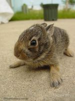 Baby bunny by CatharsisJB