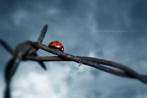 Barbed Bug by Stridsberg