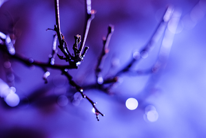 ...bokeh. by square-brain