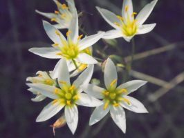 Tiny White Flowers by TheGerm84