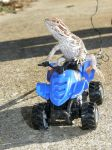 4wheelin Dragon by redtailhawker