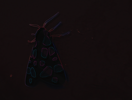 The Moth by Chequer