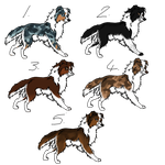 Border collie adoptables by BLACK-Tango