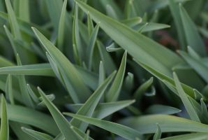 Grass 001 by MonsterBrand-stock