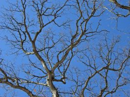 106 - branches by WCat-stock