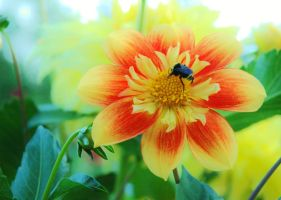 A Bee in Fairyland by auto64