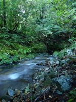Picton Stream by LiquidityImages