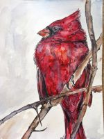 cardinal water color final by lamelobo