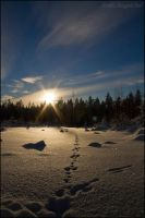 Fimbulvinter V Footprints... by Wodenswolf