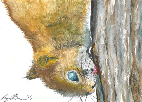 Red Squirrel Licking Tree by MaryThompsonArt