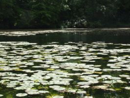 Lily Pond 6 by TimeWizardStock