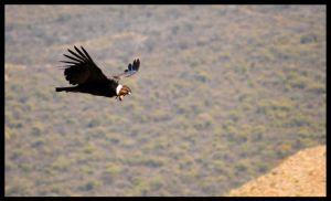 Flying by me side by GonBo