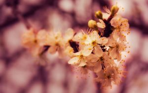 Happy easter 2010 wp by Vemp