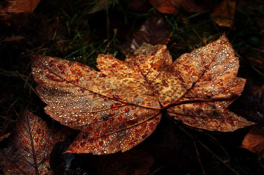 Autumn Remembrance pt.VI. by realityDream