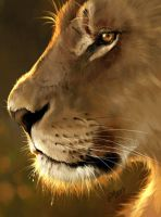 Doodle 196 - Lioness profile by giovannag