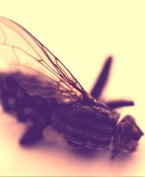 Fly macro2 - revised by mesign
