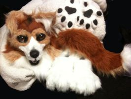 Collie Suit for Sebastian by Ifus