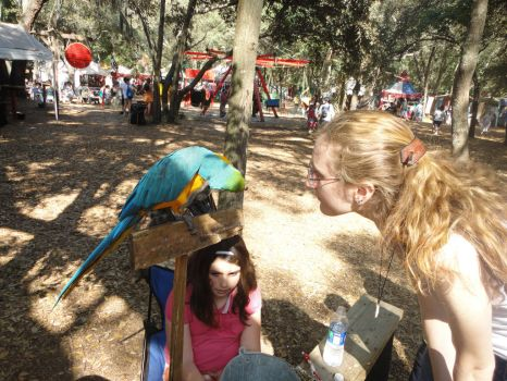 Macaw and I at Ren Fest, me speaking bird by AkizuRyuuri
