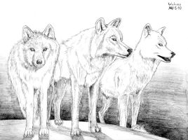 Three White Wolves by DragonWolfACe