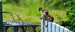 Monkey Business by musician4000