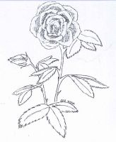 Roses -- for Jonas's 18th by phoenix-chick12